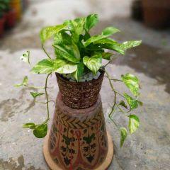 Money Plant brown terracotta pot